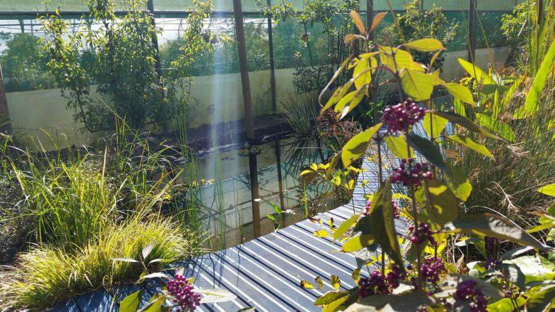 bouaye jardin japonais 44 st mars de coutais